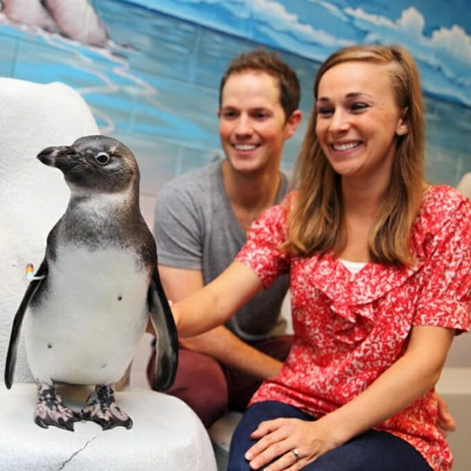 2018 Penguin Encounter